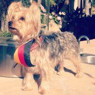 David Hasselhoff's pet Coco