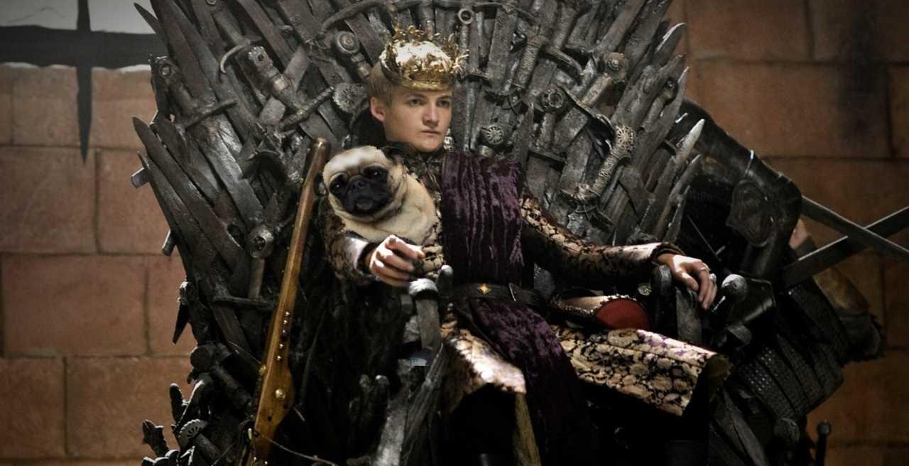 Jack Gleeson - pug - King Joffrey 1