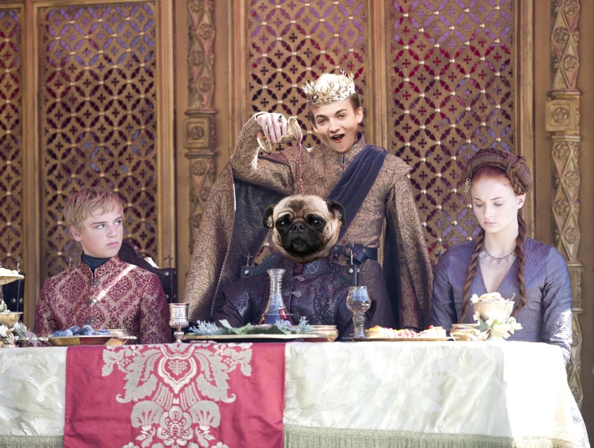 Jack Gleeson - pug - King Joffrey 2