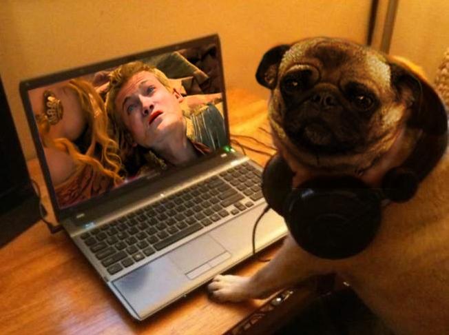 Jack Gleeson - pug - King Joffrey 7