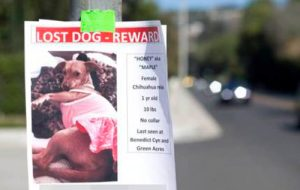 Katie Holmes lost dog Honey