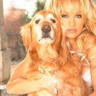 Pamela Anderson's pet Jojo