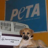 Pamela Anderson's pet Pyari