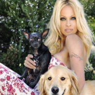 Pamela Anderson's pet Varmie