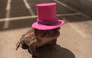 Man makes cute hats for toad that visits his porch 3
