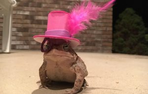 Man makes cute hats for toad that visits his porch 4