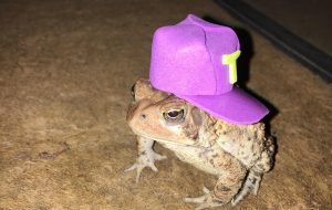 Man makes cute hats for toad that visits his porch 5