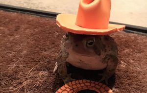 Man makes cute hats for toad that visits his porch 6