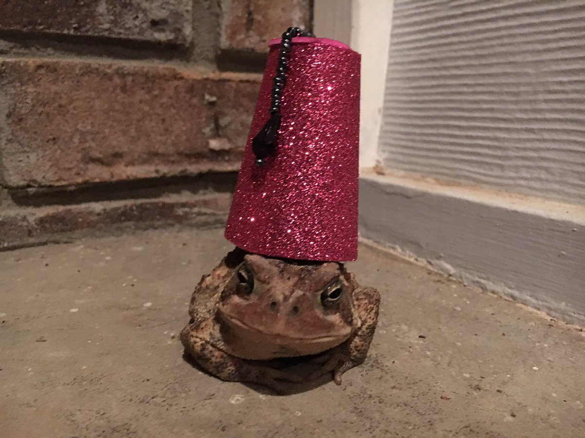 Man makes cute hats for toad that visits his porch 8