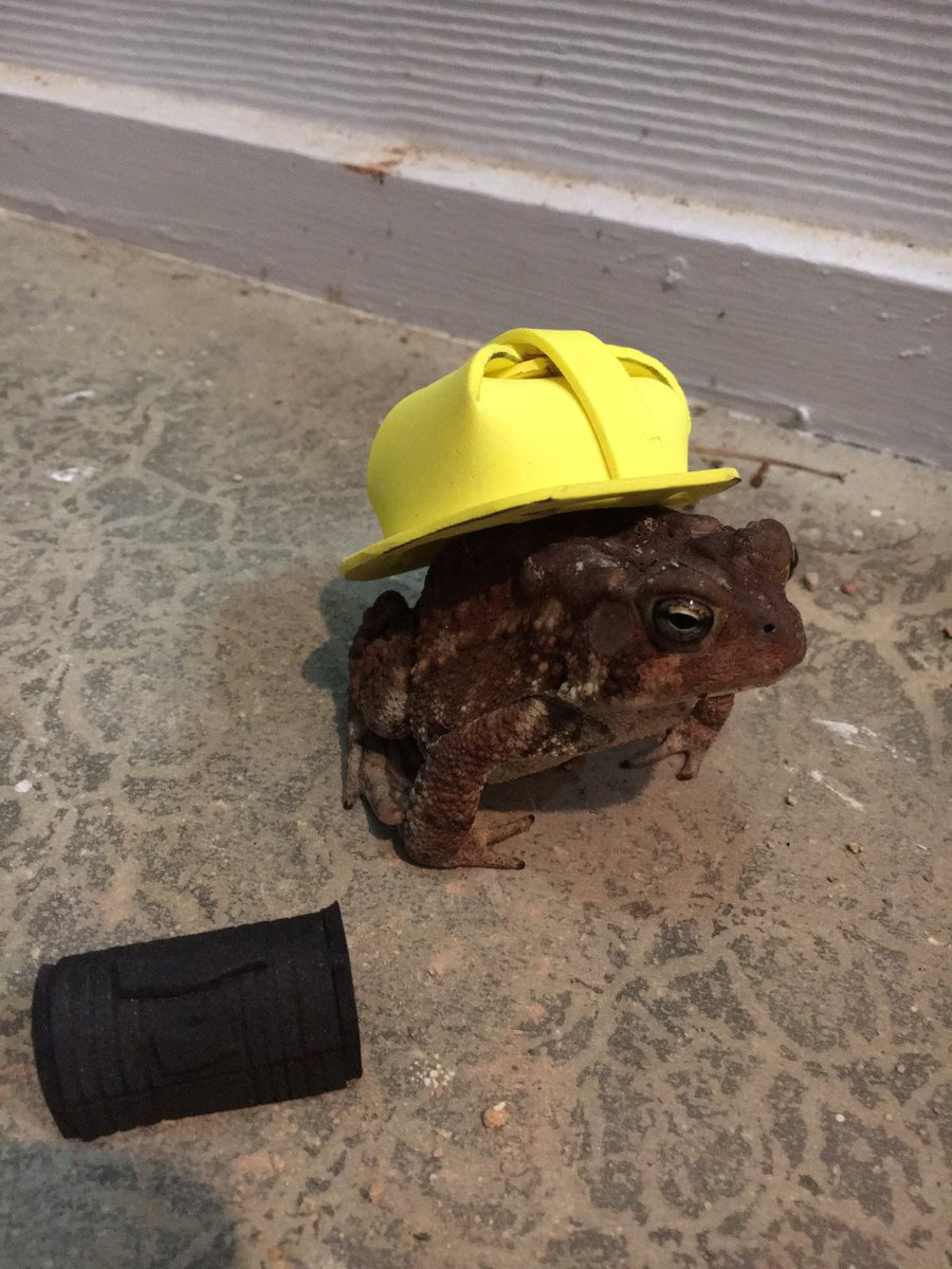 Man makes cute hats for toad that visits his porch 9