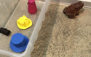 Man makes cute hats for toad that visits his porch 10