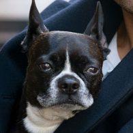 Oscar Isaac's pet Moby