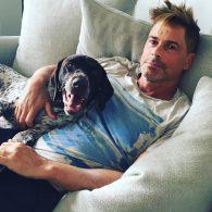 Rob Lowe's pet Jack
