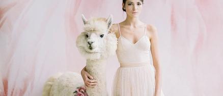 Skip human bridesmaids and groomsmen, pick wedding llamas instead!