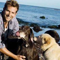 Bradley Cooper's pet Samson