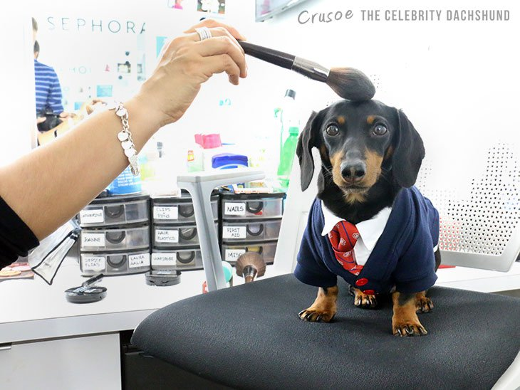 Crusoe the dachshund 4
