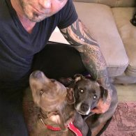David Bautista's pet Frankie and Sadie