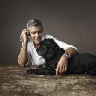 Amal Clooney's pet Einstein