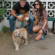 Amal Clooney's pet Louie