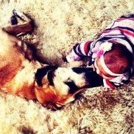 Katherine Heigl's pet Oscar