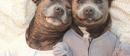 Pitbull brothers Darren & Phillip fight breed specific legislation in pyjamas