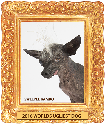 Sweepee Rambo ugliest dog winner 2016