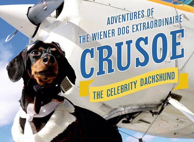 Crusoe the Celebrity Dachshund Net Worth: Salary ...