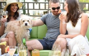Top 10 dog-friendly luxury hotels in North America