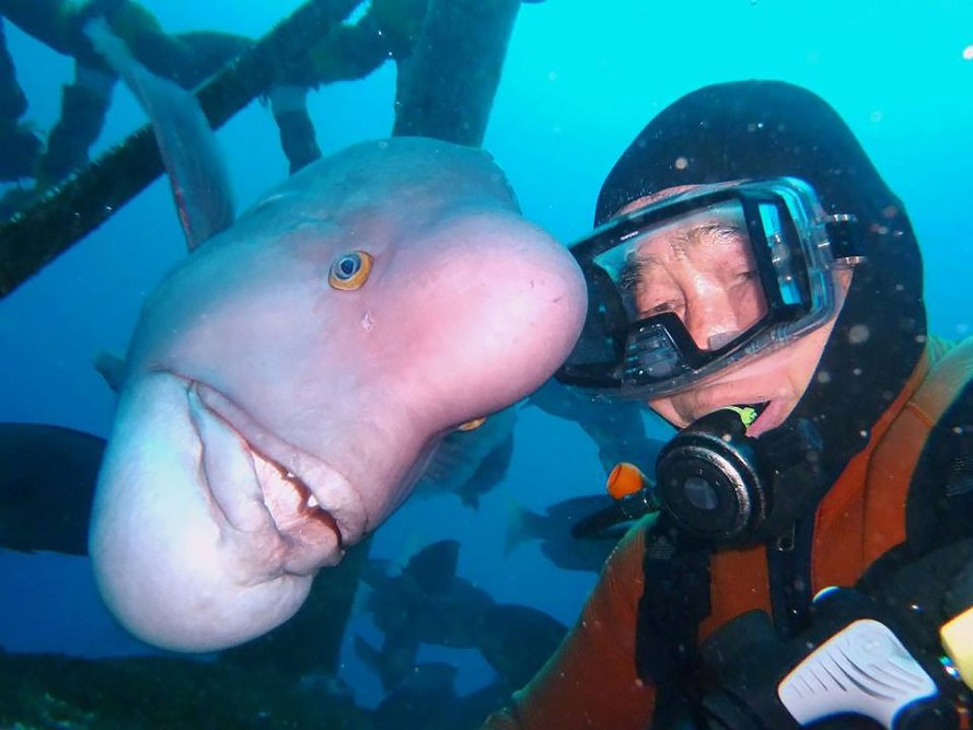 Diver and his BFF (Best Fish Friend) have been meeting up for 25 years