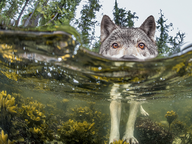 Vancouver Island Sea Wolves