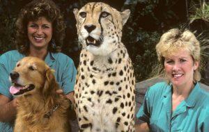 Arusha Anna cheetah San Diego zoo