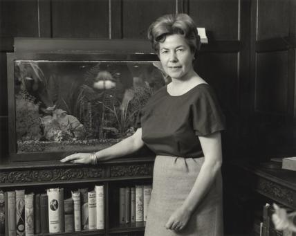 Christina Foyle tortoise