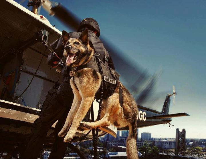 German Shepherd Helicopter hero dog