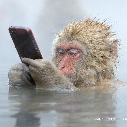 Macaques Monkey indonesia bali