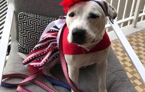 Bonnets for Abigail hero dog