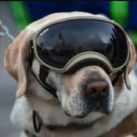 Frida dog doggles mexico earthquake
