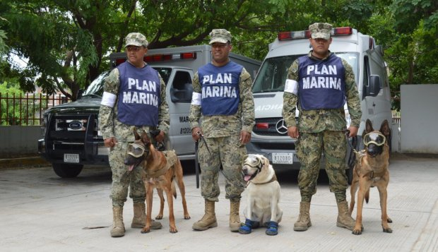 Frida mexico semar marines earthquake hero dog