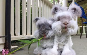 Suki otis bunnies cute @wally_and_molly