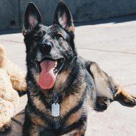Alexa Vega's pet Sydney Raye