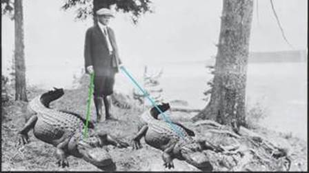 alligator president Hoover