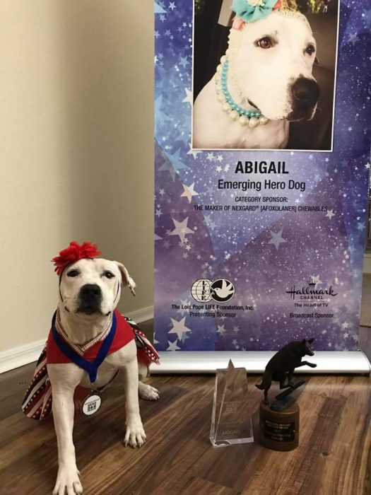 bonnets for abigail hero dog pitbull