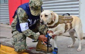frida mexico earthquake semar hero dog