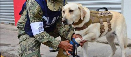 Earthquake devastates Mexico, four legged doggo heroes come to the rescue!