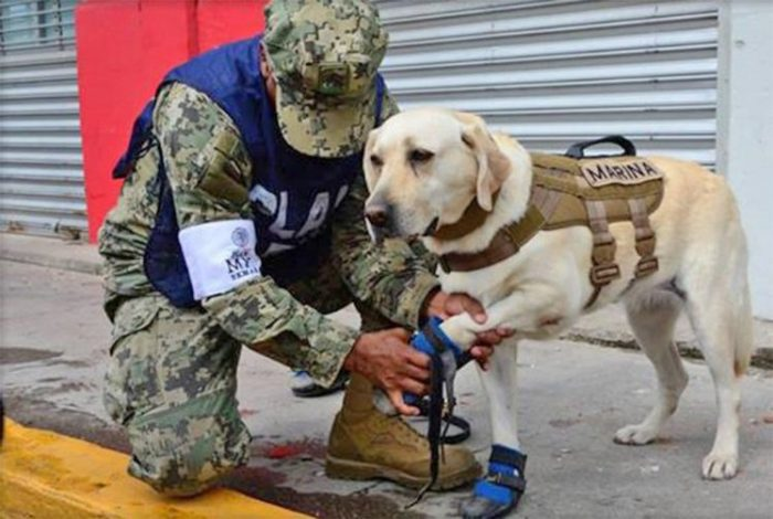 frida mexico earthquake semar hero dog