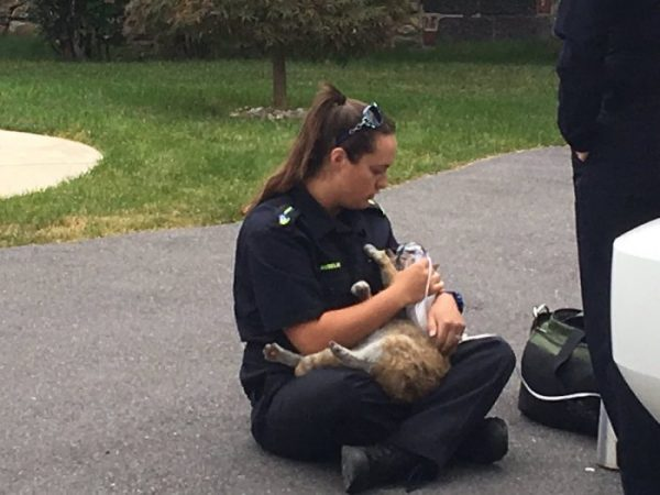 wnep paramedics cats