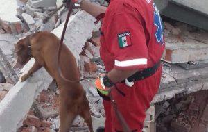 titan search rescue dog mexico