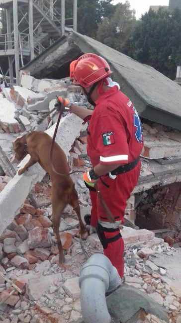 titan search rescue dog mexico