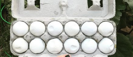 To catch a turtle poacher: conservationists use fake eggs to bring down bad guys!