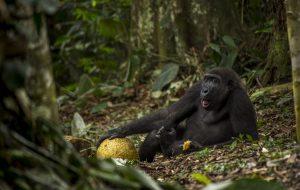 Daniel Nelson Wildlife Photographer of the Year