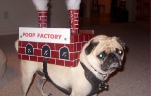 pug poop factory halloween dog costume